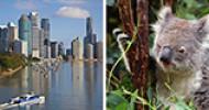 NEU: Koalas betreuen und Englisch lernen