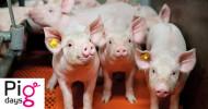 Agravis Raiffeisen AG: Online-Seminare Pigdays starten (FOTO)