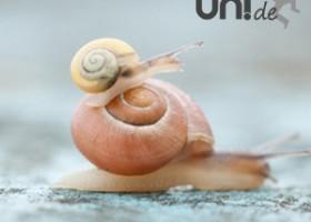 Zeit verstehen – eine neue Rubrik auf UNI.DE